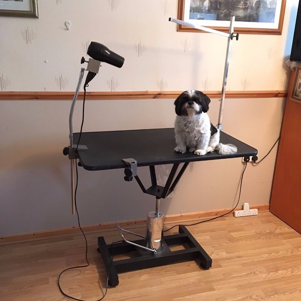 Dog Grooming Table Hydraulic Lift Type For Small To