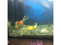 Six goldfish free