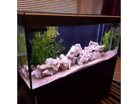 240litre aquarium full setup
