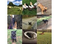 Dog walking, Pet Sitting and Freelance groom service in Wimborne and surrounding areas.