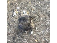 Dog needs rehoming for free