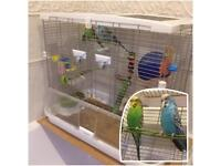 Two Budgies (male) +2 cages