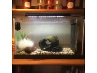 19l Fluvel Spec fish tank
