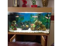 Fishtank 110 litres ,fully working ,filter ,pump lights ect ,includes 4 fish