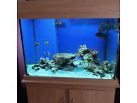 Second-Hand Aquariums for Sale | Gumtree