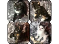 Colourful kittens black white ginger