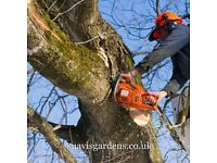 Tree surgeon Tree Removal Stump grinding Crown Reduction Crown Lifting Re-Shaping Deadwood Thinning