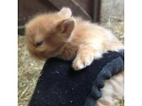 Baby Rabbits - ready 21st December. **RESERVE NOW**