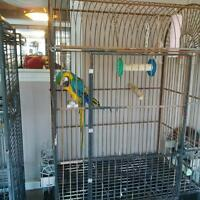 Blue and Gold Macaw with Large Cage