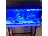 Fish with fish tank and equipment