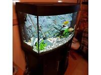 Jewel 180Fish Tank