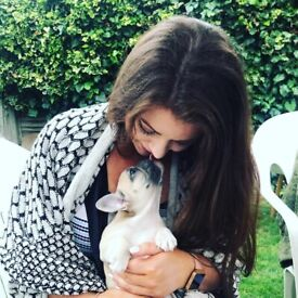 Friendly, flexible dog walker in Bournemouth/Westbourne for £10 per hour