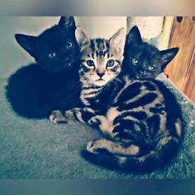 Three little cats looking for home