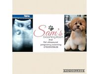 Pet pregnancy ultrasound scanning and grooming services