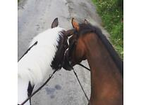 Rider wanted to hack - Morpeth/stannington