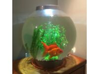 biOrb with Light 30 Litre Silver Coldwater Aquarium, With beautiful gold fish