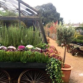 Full Time Cleaning Supervisor for Garden Centre/ Cafe in TW10 (Permanent)
