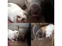 House rabbits