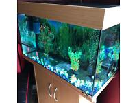 SELLING MY TANK OF FISH!