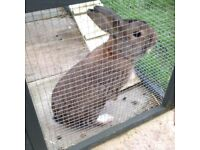 Rabbit - Free to a very loving home.