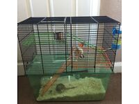 2 lovely male gerbils and cage