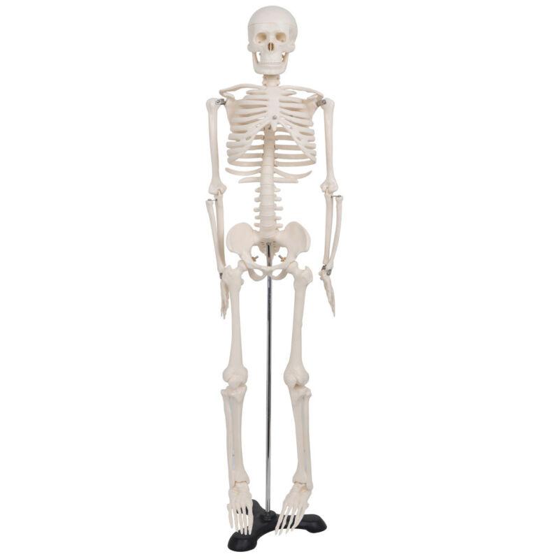 New 85CM Human Anatomical Anatomy Skeleton Model Fexible Medical School Teaching
