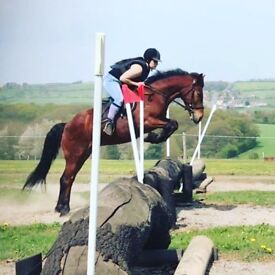 Fab pony for sale