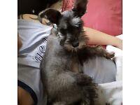Missing dog girl