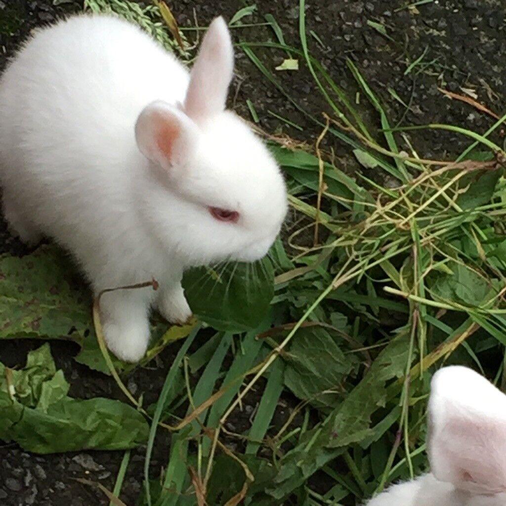 Beautiful baby rabbit