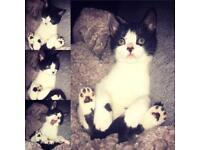 Fifi, 4 month old kitten.