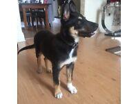 5 month ol puppy