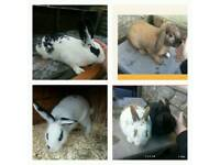 5 rabbits looking for forever homes