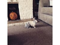 Rabbit looking for forever home