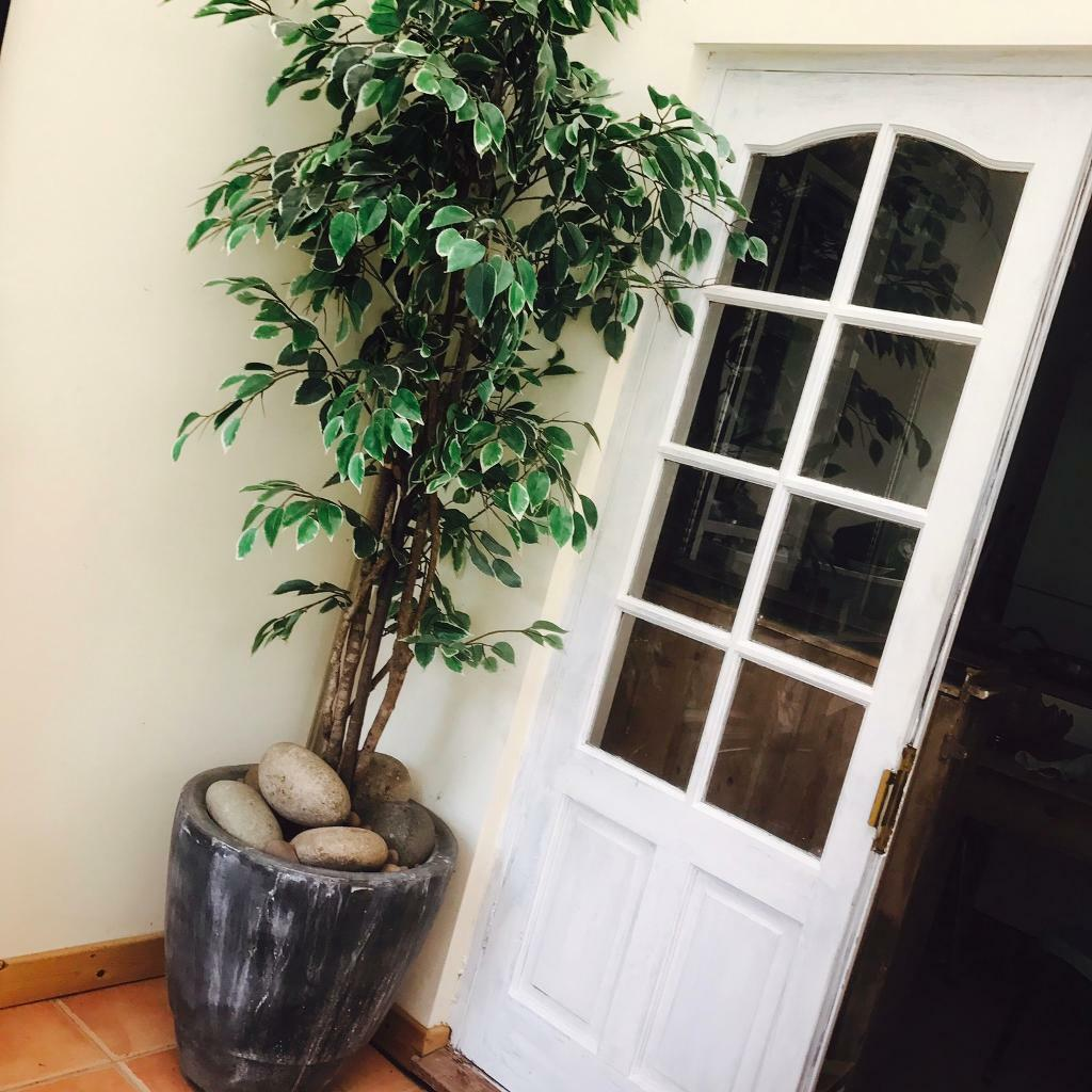Plant in Stone Pot