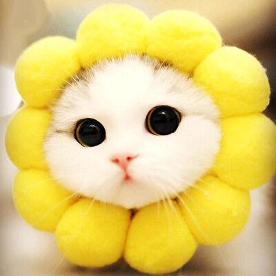 Pet Kostüme, Sonnenblume Kopfschmuck Katze Kostüm, für kleine - Hund Kostüme Für Weihnachten