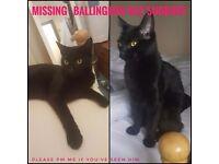 MISSING BLACK CAT FROM BALLINGDON STREET SUDBURY!