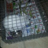 Friendly Rabbit with cage for sale