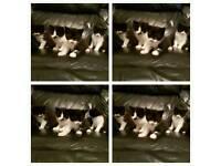 Kittens fluffy bundles of fun.
