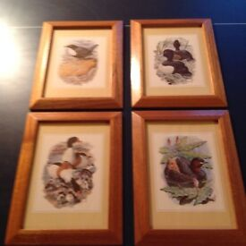 Set of 4 Framed Bird Prints