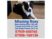 Missing Roxy