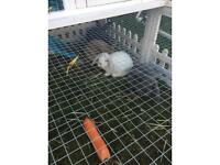 Beautiful baby rabbits