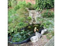 Fish Pond/Garden Water Feature