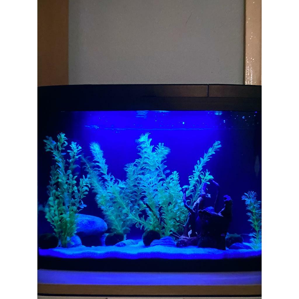 Fish tank for sale | in Tower Hamlets, London | Gumtree