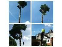 Qualified Tree surgeon