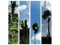 Qualified Tree surgeon