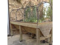 Vegetable trug- vegetable grower above ground