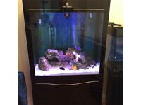 clearair 260 litre fish tank and cabinet in acrylic black gloss