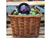 Wicker Succulent planter with light up purple orb!