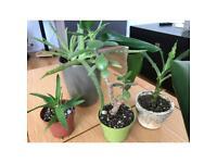 Plants bundle