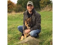 Field and Hounds dog walking - insured, DBS checked and experienced with dogs
